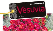 Décorosier Vésuvia Production Pépinières DESPRAT en Conteneur