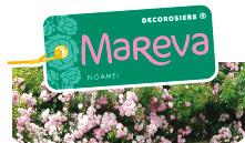decorosier Mareva, Production en Pépinières , Conteneur DESPRAT