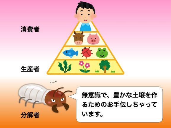 生態系の中のシロアリは分解者