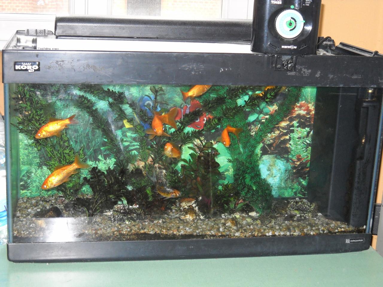 il nostro mitico acquario