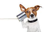 contacto Amican Escuela Hotel Canino