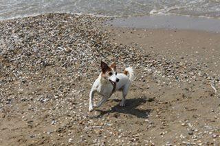 Bild: Hund am Strand