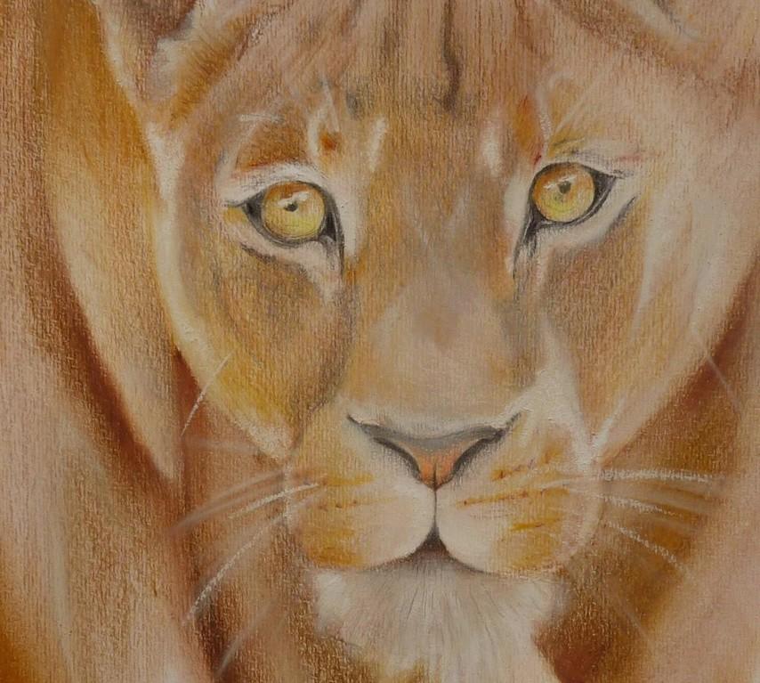 leonessa, pastelli e acquerello su cartoncino, 24x33cm