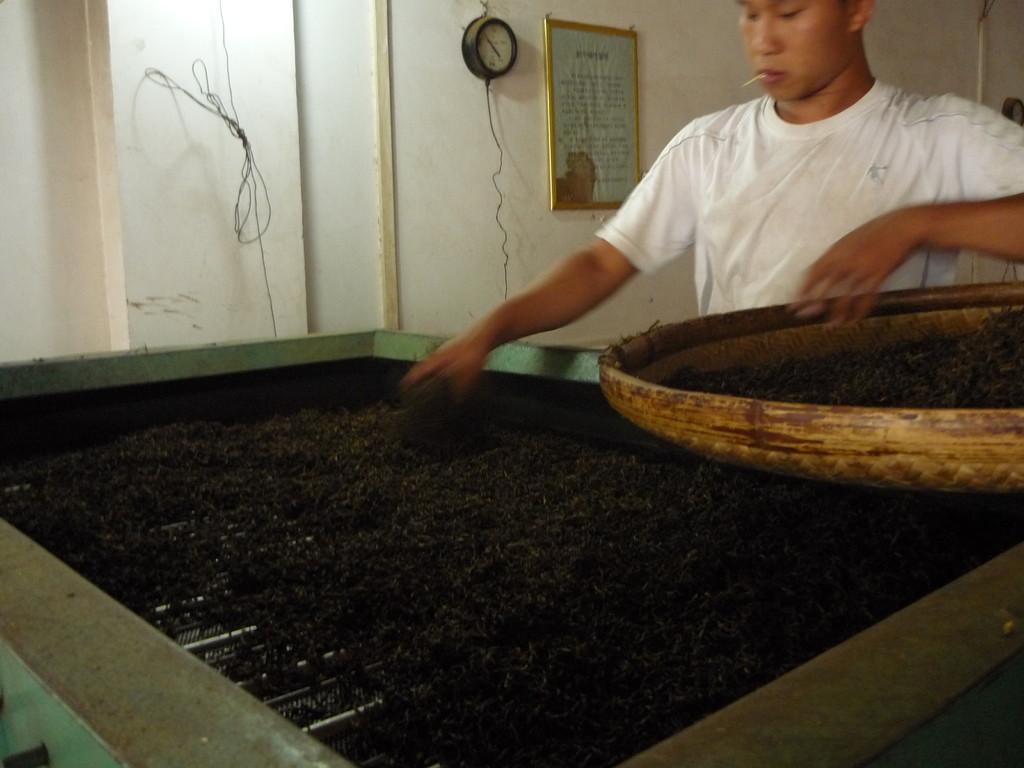 Die Fermentation, mit der es schwarzen Tee gibt