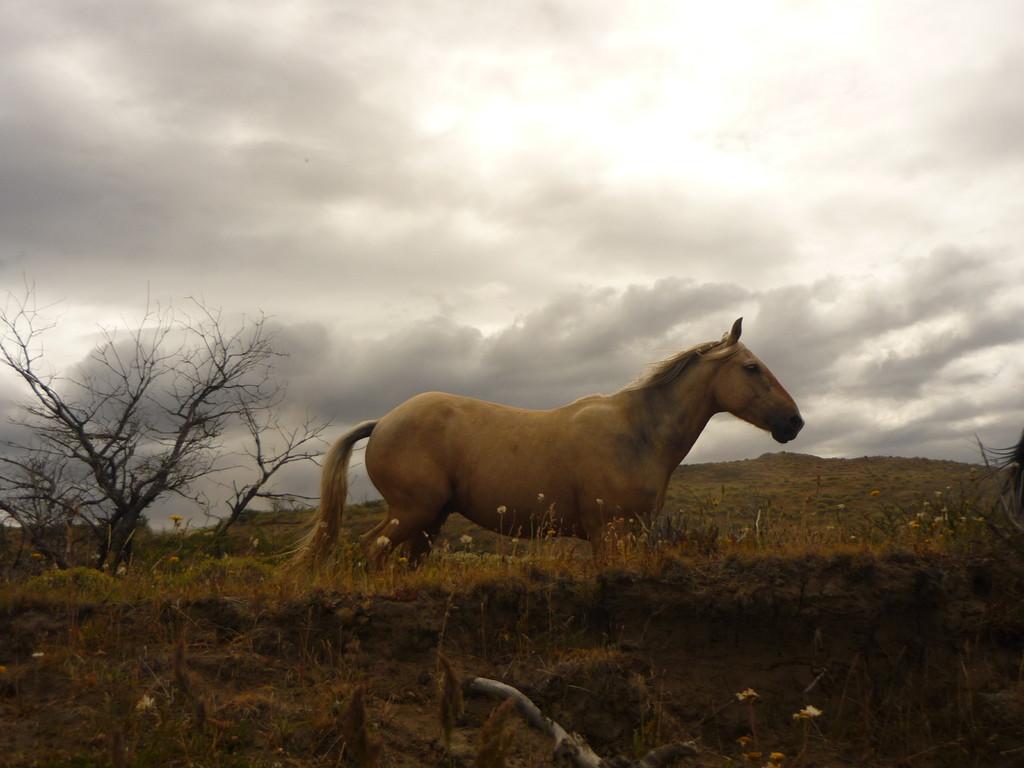 Torres del Paine = DAS Touristenmagnet im chilenischen Patagonien