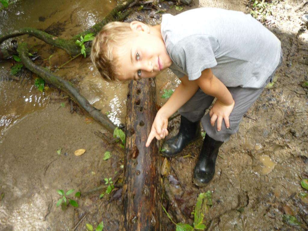 Spuren der Termitensuche des Spechts