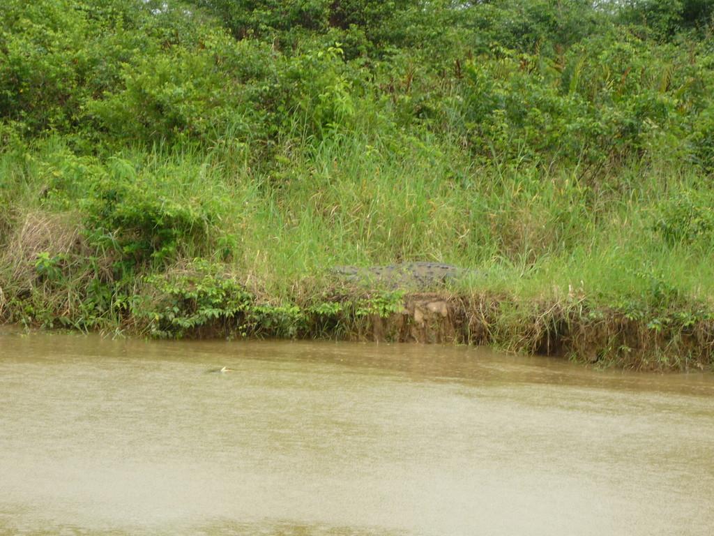 1. Krokodil in Sicht!