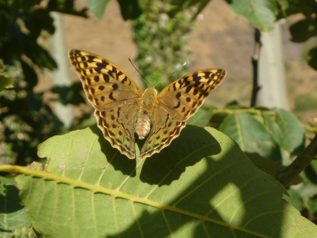 Rund ums Haus wunderschoene Schmetterlinge