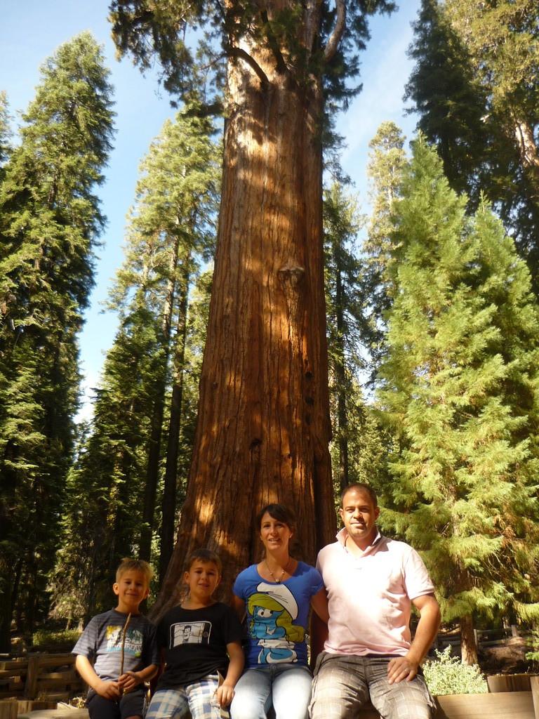 Der groesste Baum der Welt