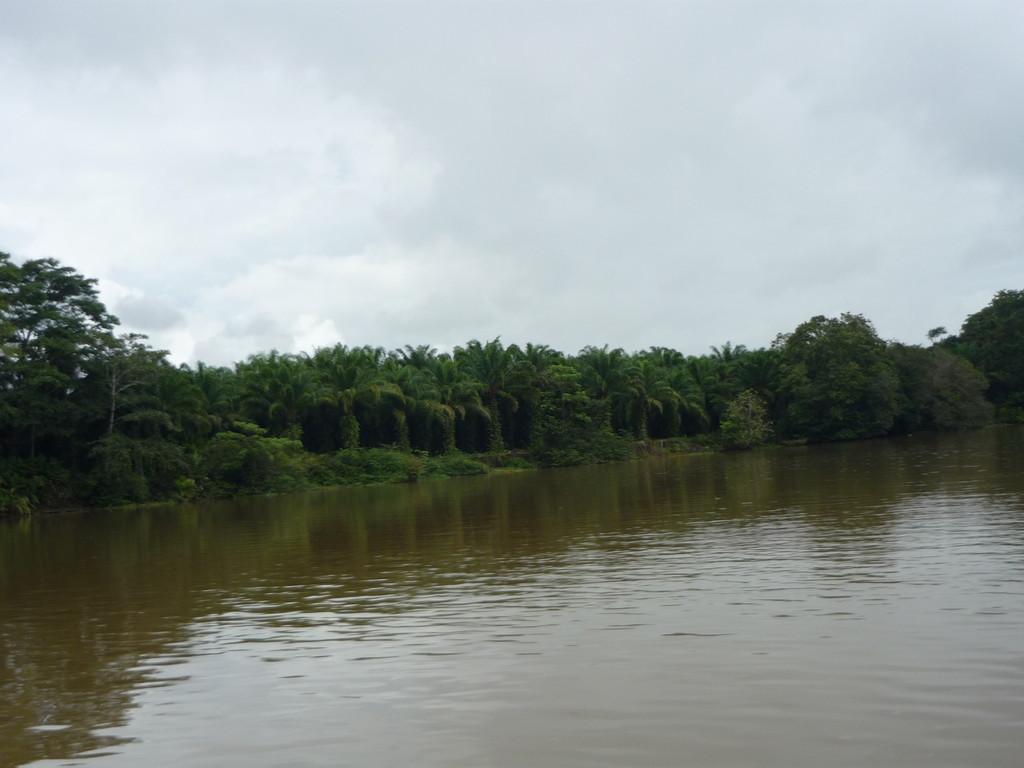 Fahrt in der Lagune, links Palmenfelder aus denen Palmoel gewonnen wird