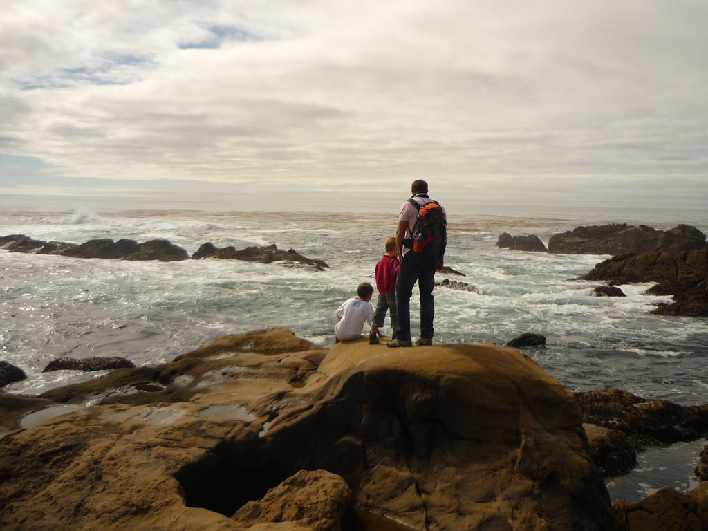 Wir sehen Seeloewen, Seehunde, Otter und Kormorane