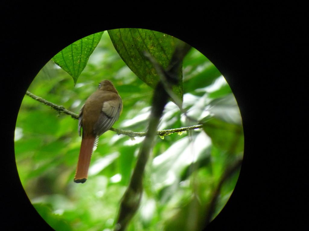 Dieser Vogel wird SEHR selten gesichtet, den Namen habe ich vergessen