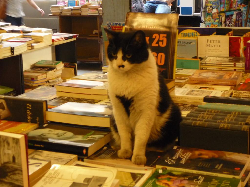 Eine sehr belesene Katze