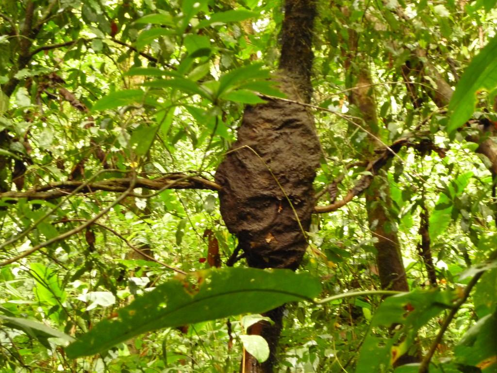 Ein wunderschoener Termitenbau