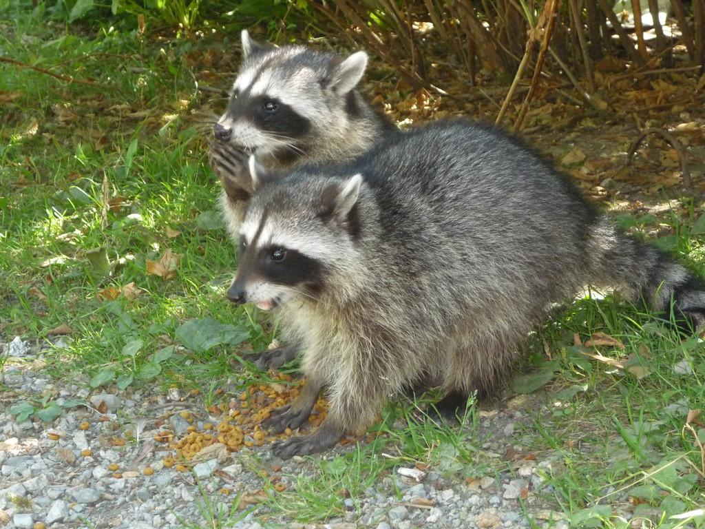 und die zwei frechen kleinen putzigen suessen Kleinen