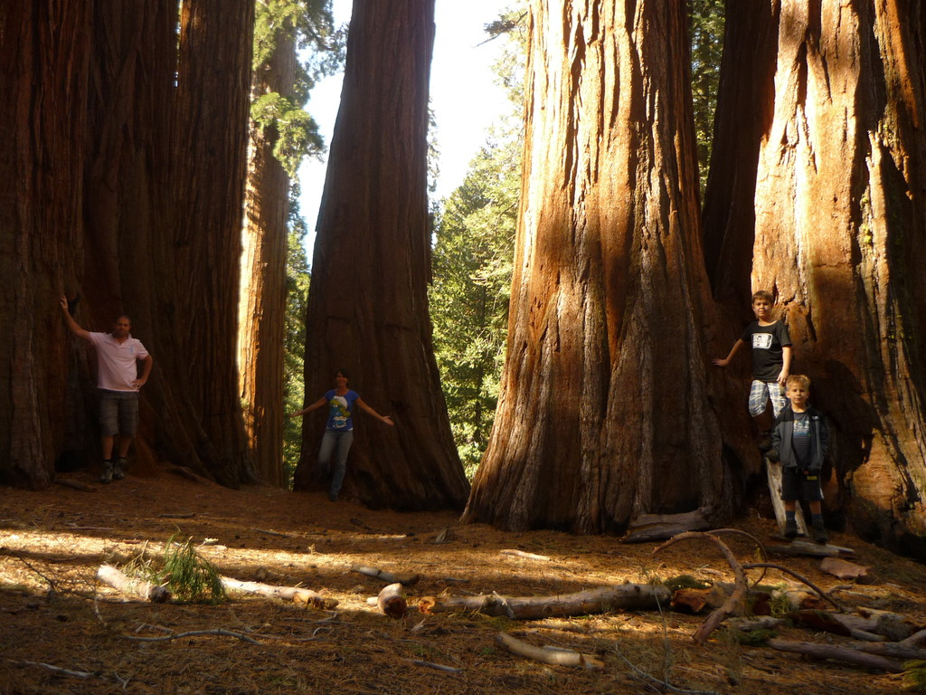 Wanderung durch den Sequoia Park, wo die groessten Baeume der Welt stehen