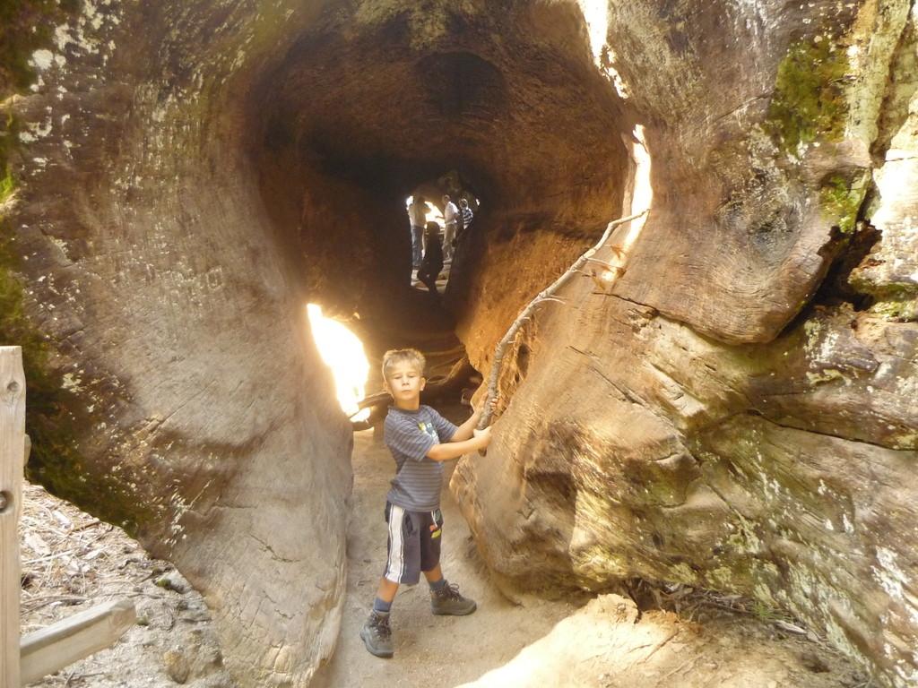 Der Baumstamm-Tunnel