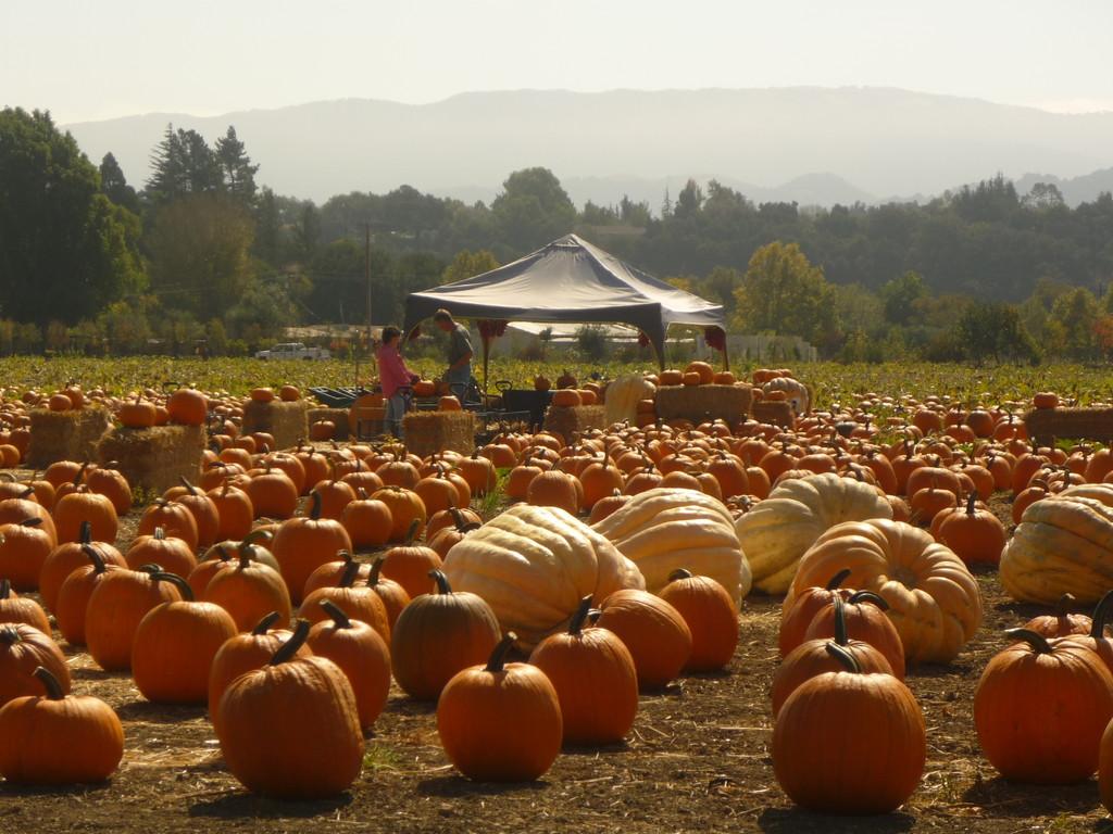 Herbstzeit ist Kuerbiszeit und Halloweenzeit