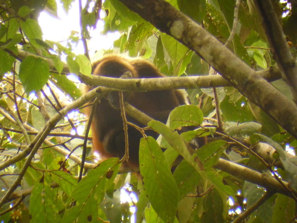 Affen begleiten uns auf dem ganzen Weg