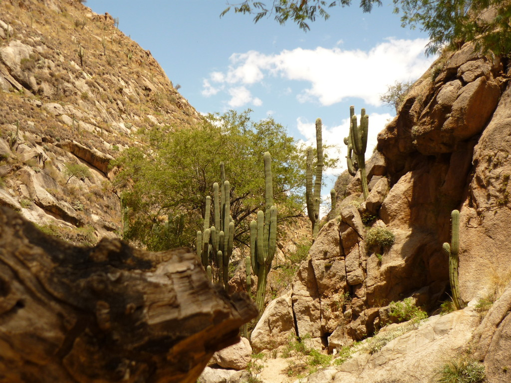 Wanderung entlang dem Rio Colorado