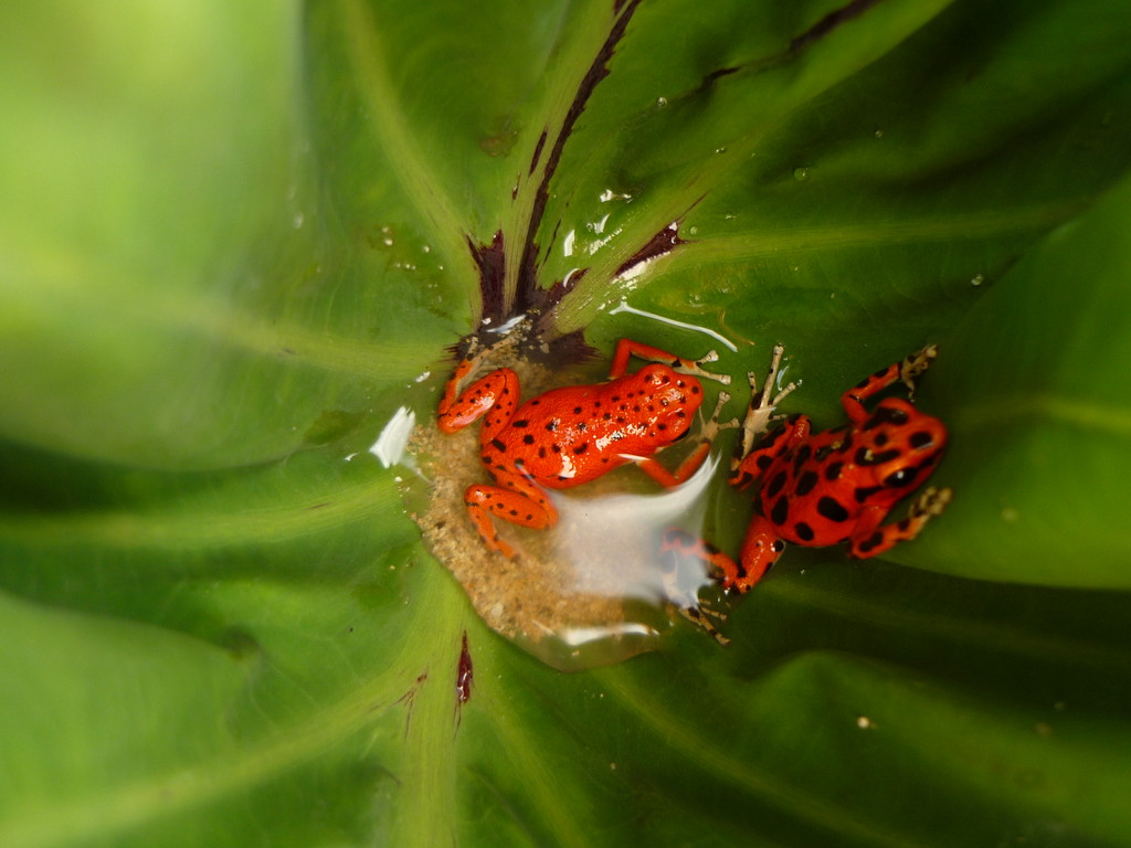 .. zeigt uns die Red Frogs