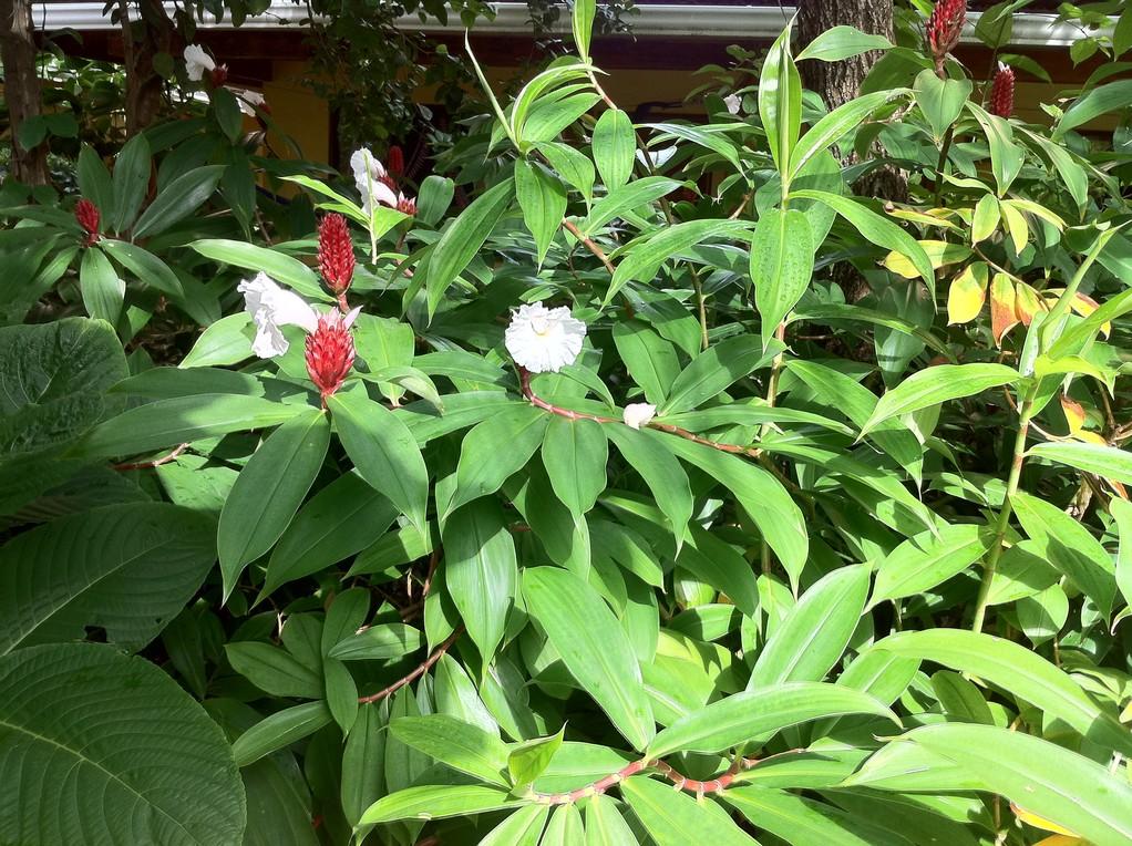 Tropische Blumenpracht im Garten