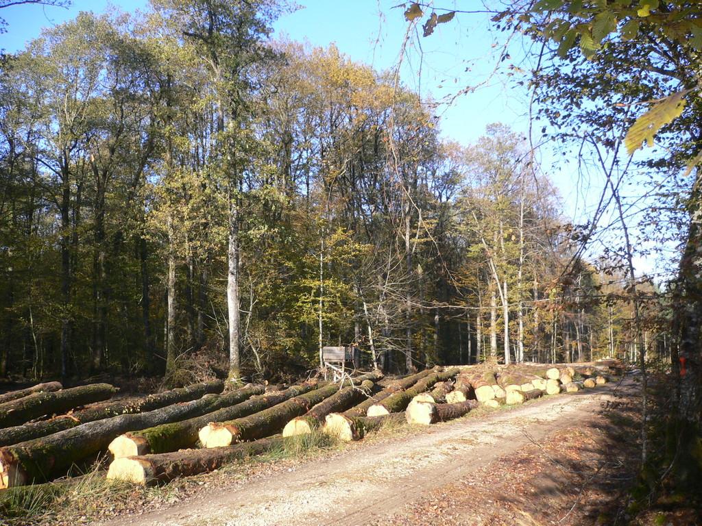 Activités: Coupes de bois