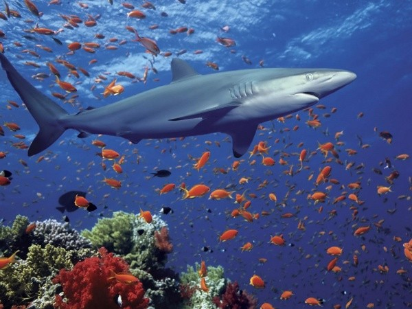 Глюкозамин, который содержится в акульем хряще помогает коже выделять коллаген, с уменьшением выработки которого связано старение кожи.