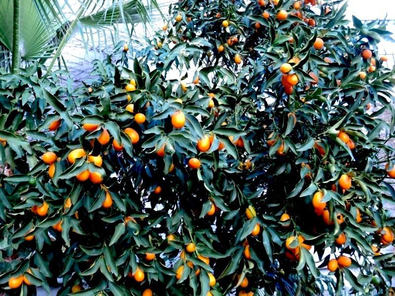 Эфирное масло мандарина – уникальное косметическое средство, способное удивительно тонизировать и освежать утомленную, дряблую кожу. Более того, оно обладает силой выравнивать рельеф эпидермиса.