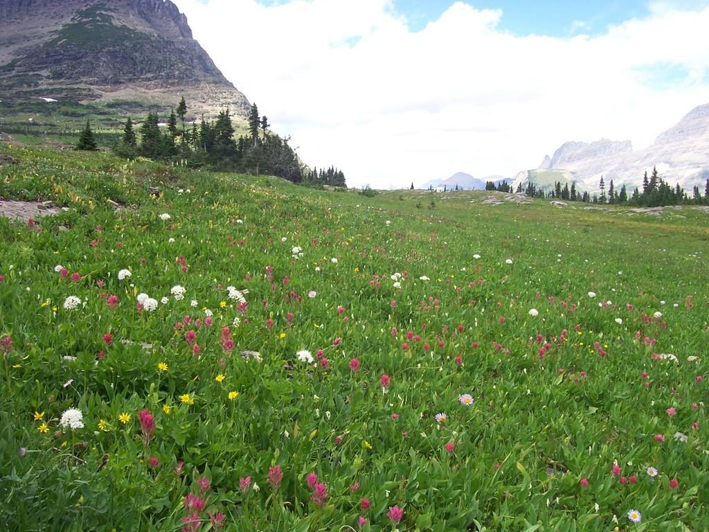 Тибетские травы произрастают в самых экологически чистых районах земли.