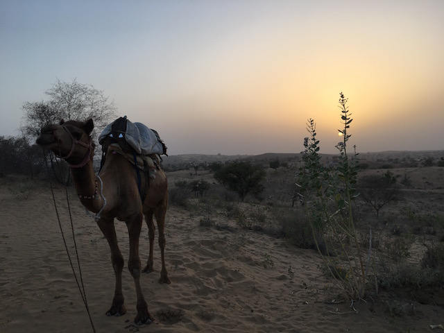 Yanick's Kamel in der Pause