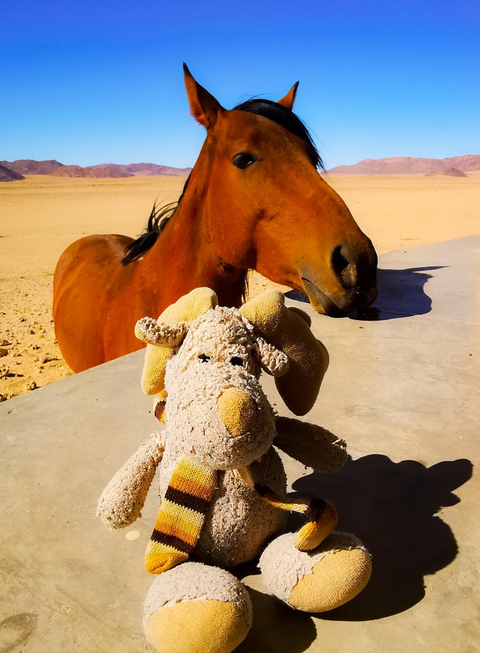 Elli mit Ihrem Buddy in Aus  (Namibia)