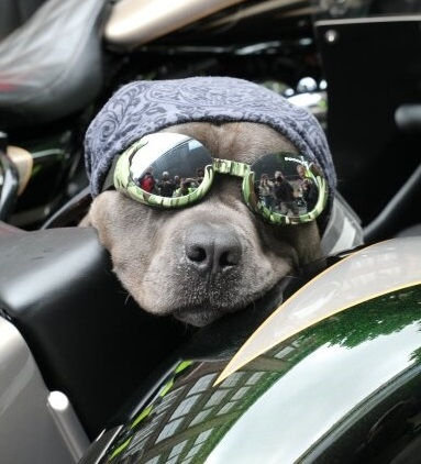 """dogs on the road"" / Foto Copyright: Hamburg Chapter Germany"