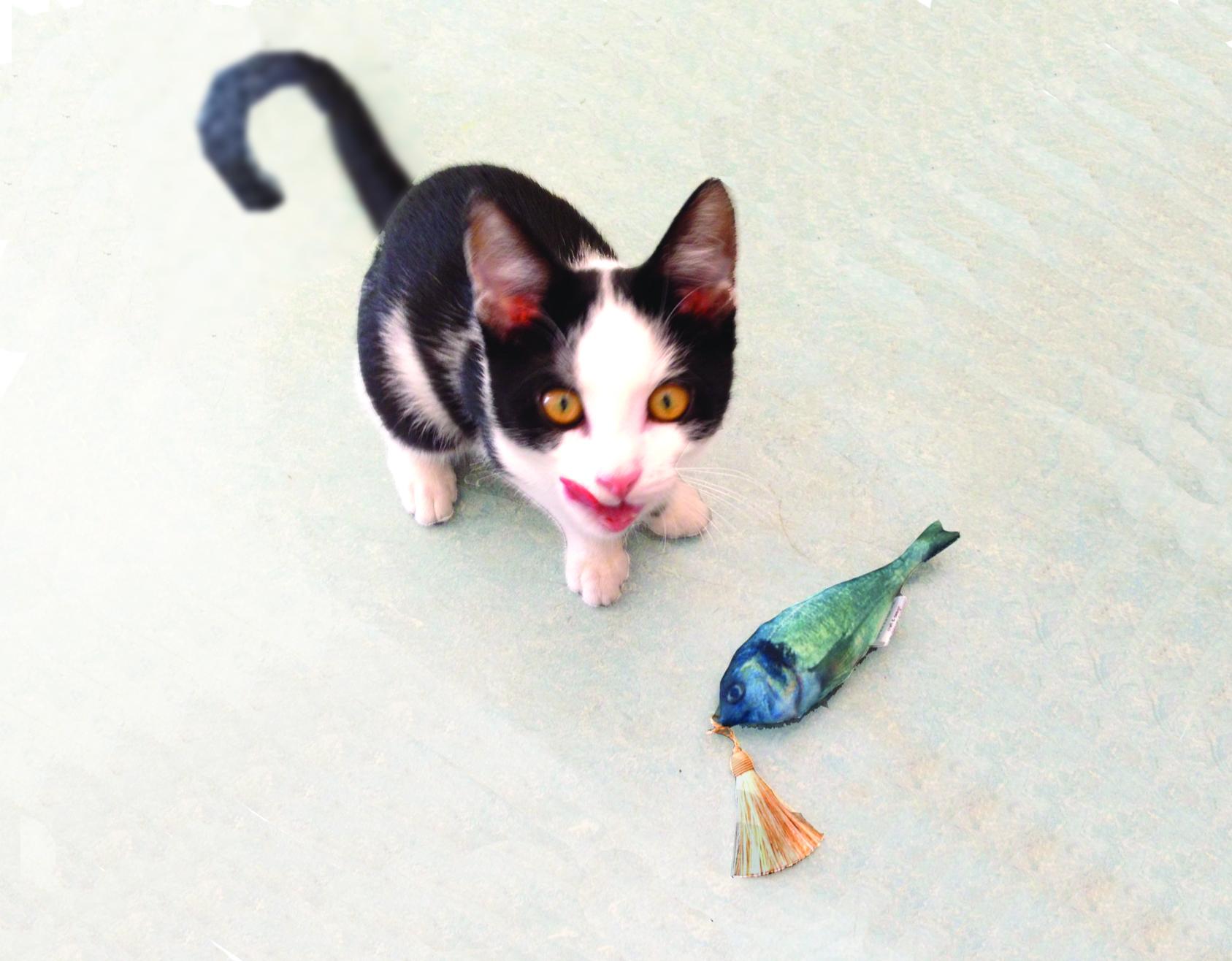 Alle Katzen lieben Fisch