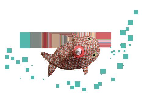 kuck mal, ein Regenbogen-Spreefisch