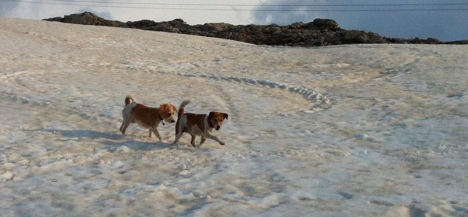 Stilfser Joch im Schnee
