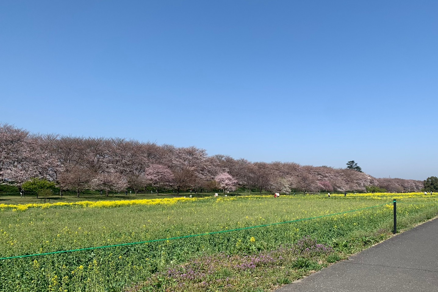 A flowering of park
