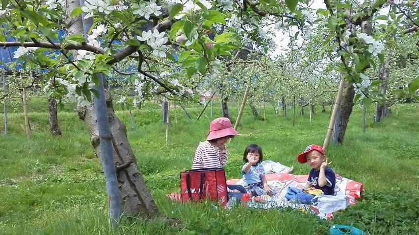 りんご花見