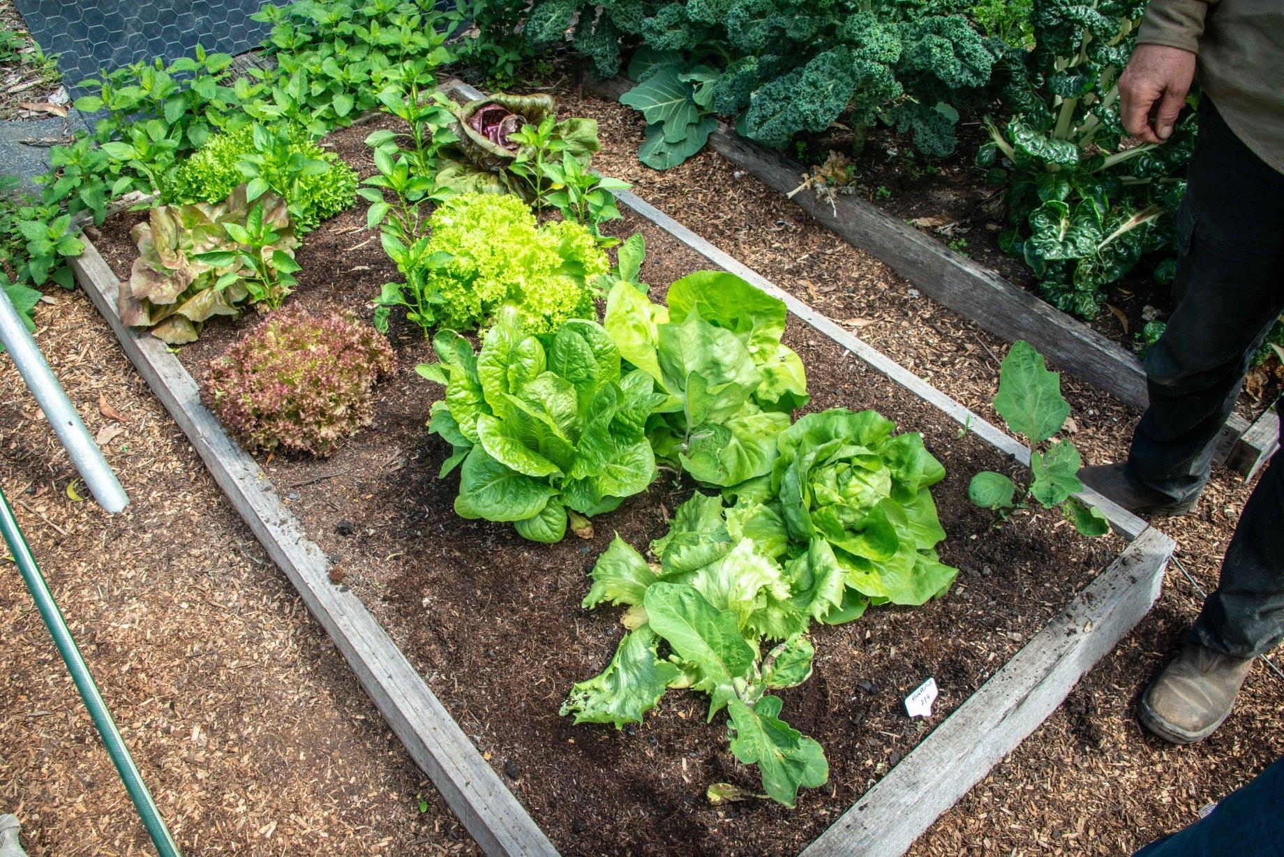 Le carré de culture du potager vivrier - the daily life veggie garden
