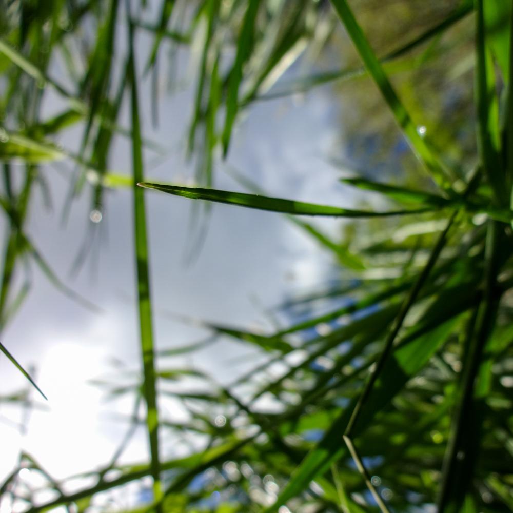 Das Gras von unten wachsen sehen