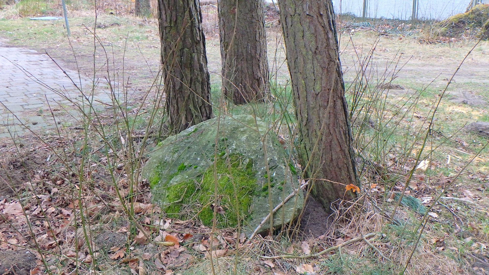 Einen Baum gerettet