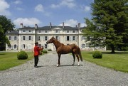 Haras National de Gélos