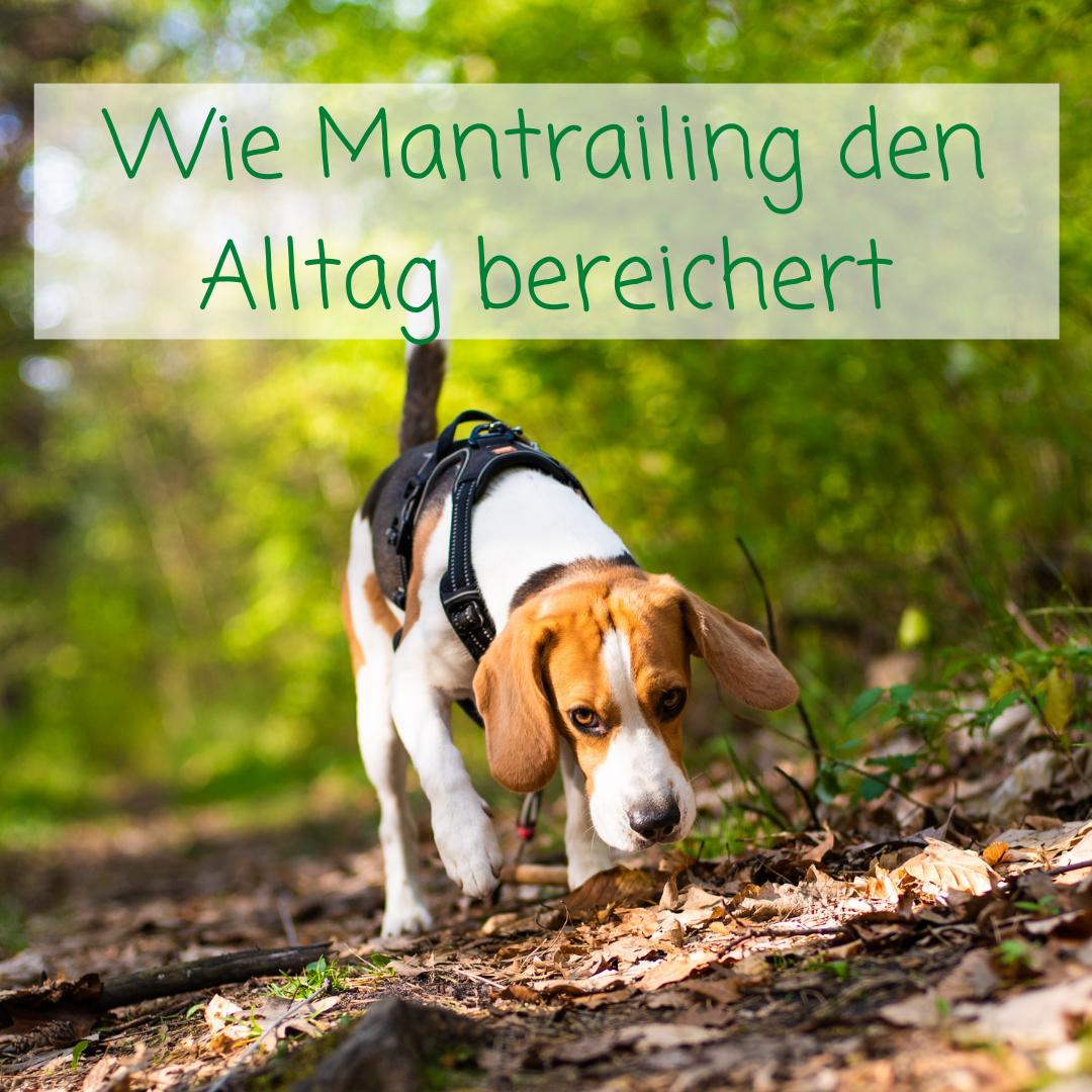 Wie Mantrailing das Hundeleben bereichert