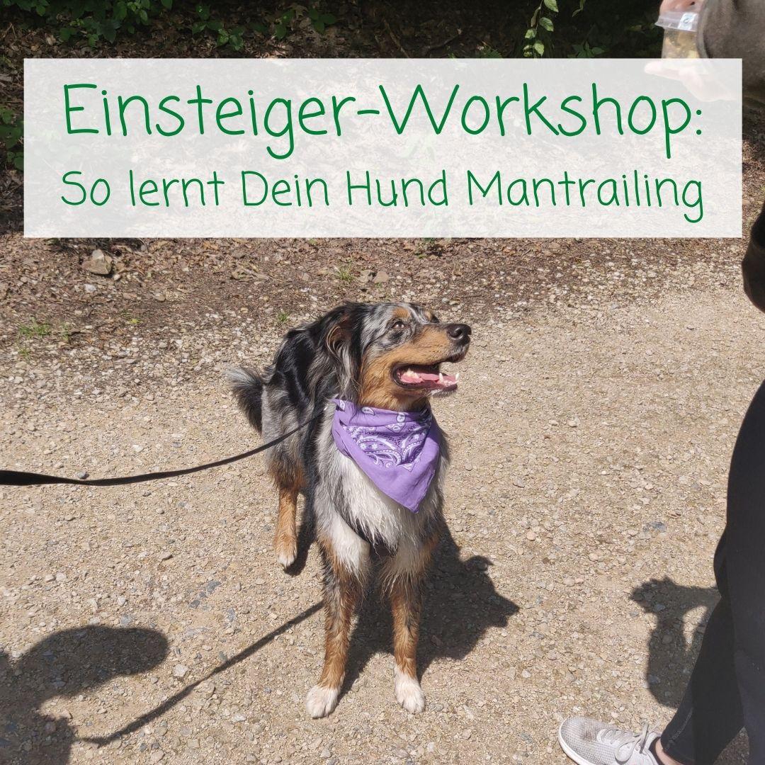 Mantrailing lernen - So läuft der Workshop für Einsteiger ab