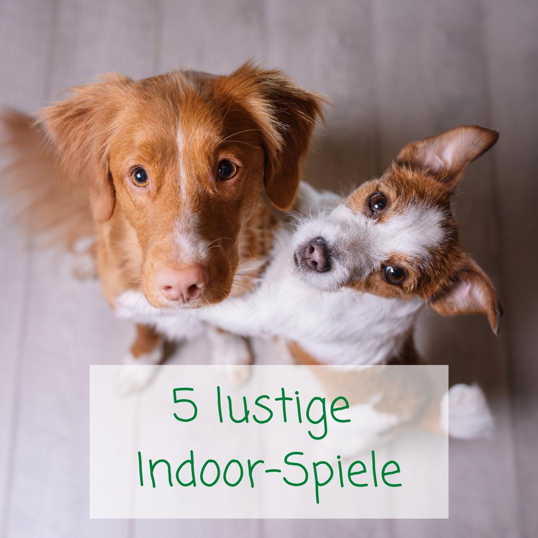 5 Ideen, wie du deinen Hund im Haus beschäftigen kannst