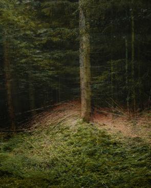 Waldlichtung, Neheim