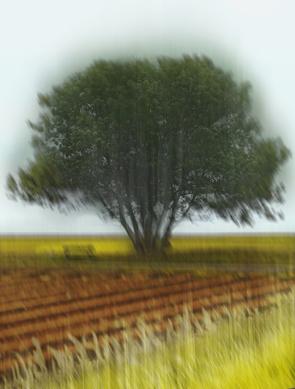 Baum, Asseln