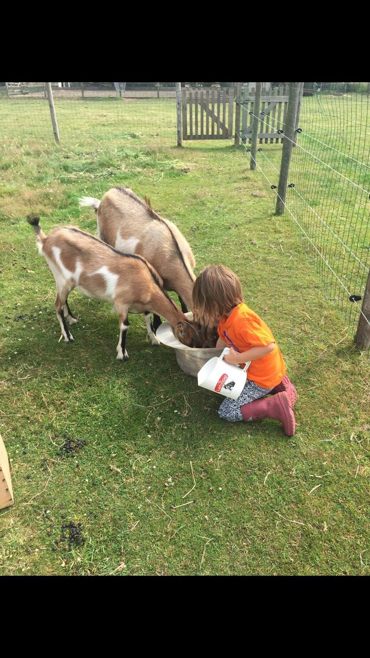 Vlaamse geit - Lana en Illys