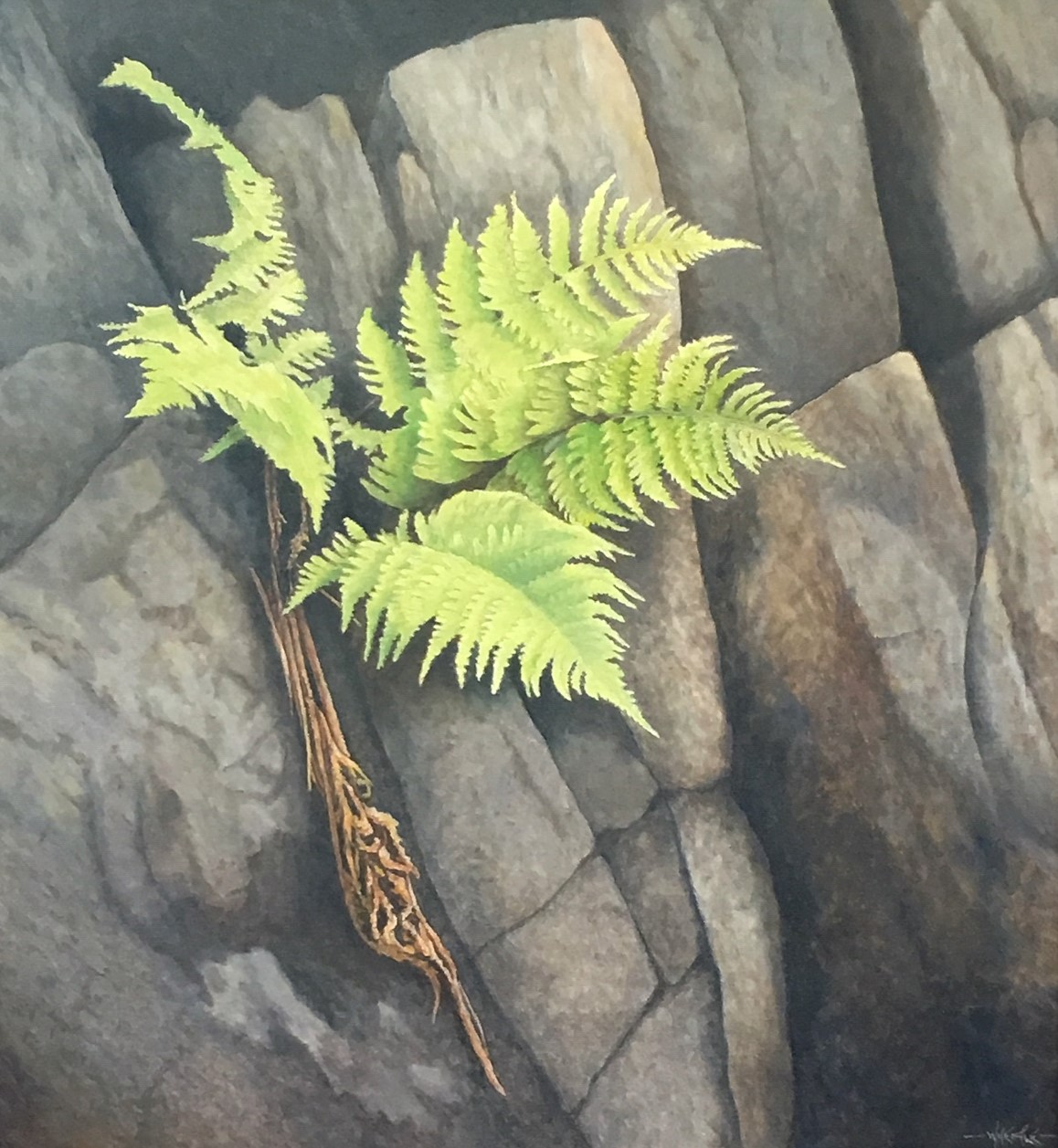 Willisville Fern 28 x 26 oil