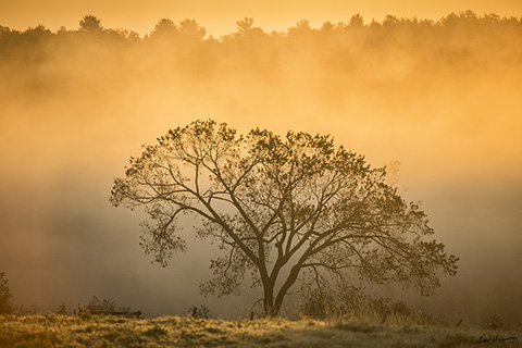 Golden Sunrise, Wanup, Ontario 18 x 27 Metal glossy photograph